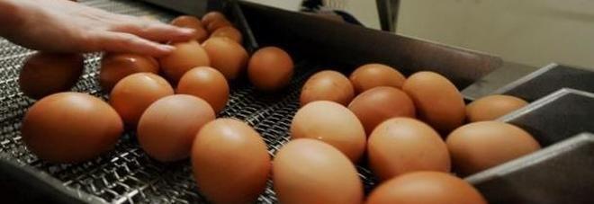 Uova contaminate in Italia - ritirati tre lotti : Allarme a Bologna e Parma