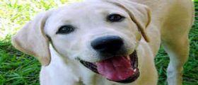 Palermo : Rapinano la padrona 80enne in casa il cane un labrador li mette in fuga!