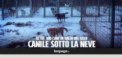 Eboli - SA : 300 cani al freddo rischiano di morire ... aiutateci!