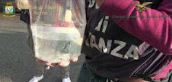 Traffico animali protetti : sequestrati a Roma coralli e 25mila pesci tropicali