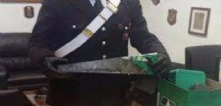 Roma : Detenuto usciva dal carcere e faceva rapine