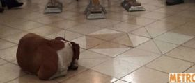 Margarita Suarez nutre per anni cani randagi : Al suo funerale vegliano salma