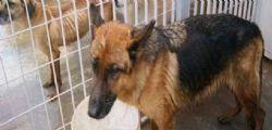 Canile lager ad Alessandria : 5 carcasse di animali trovate nel freezer