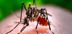 Allarme Chikungunya in Lombardia : infettata 13enne