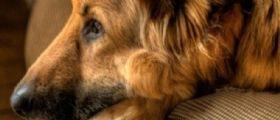Viterbo : Il cane della vicina disturba il gregge, pastore prende il fucile e lo uccide