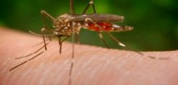 Virus Zika : grave sindrome neurologica di Guillain-Barre