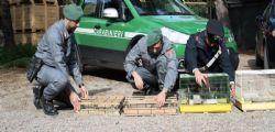 Mercato Palermo : libertati 300 cardellini