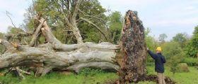 Irlanda : Sotto un albero di 215 anni sradicato dal cattivo tempo uno scheletro umano