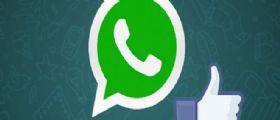 Whatsapp sempre più simile a Facebook : Tasto Mi Piace in arrivo!