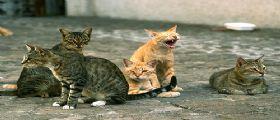 Pensionata multata per essersi presa cura dei gatti randagi
