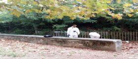 17enne ferita al parco Montelupo Fiorentino fa dei nomi a medici e inquirenti