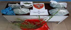 Reggio Calabria : 44enne coltiva marijuana in casa