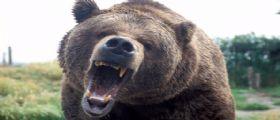 Orso mangia 4 persone in Giappone | In Birmania un coccodrillo divora una donna