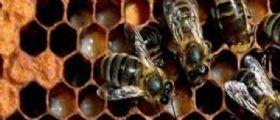 Salerno, invasioni di api nelle aule : Stop alle lezioni in due scuole