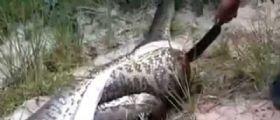 Aprono il ventre di un serpente di grandi dimensioni e fanno un incredibile scoperta : Video virale