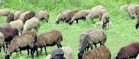 Giallo tra le rovine romane : Gregge al pascolo il pastore trova resti umani