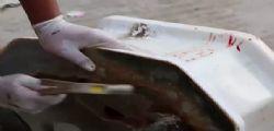 Thailandia : Serpente Pitone nel water attacca un uomo