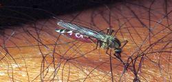 Scoperta la molecola che neutralizza le zanzare.