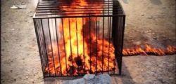 Isis : bruciate vive 19 ragazze che rifiutano di fare sesso con militanti