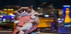 Grumpy cat : Il gatto arrabbiato più ricco del mondo!