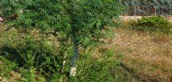 Arrestati trafficanti droga a Foggia : su yacht 4 tonnellate marijuana