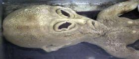 Cina: Ufo contro aereo Boeing 757 e bambole gonfiabili aliene