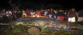 Lolong : il coccodrillo più grande del mondo è morto