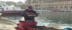Sicurezza Alimentare : A Napoli sequestrate e distrutte tonnellate di cozze, lupini e vongole