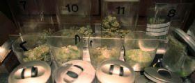 Legalizzazione Cannabis : I vantaggi per le casse dello Stato.