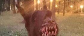 Il cane horror che terrorizza tutti : Una museruola anti-aggressione