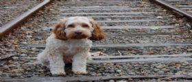 Sono 1705 i cani abbandonati solo a Luglio