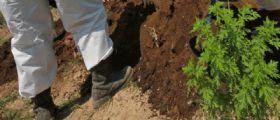 Casoria : Discarica rifiuti tossici nel campo dei broccoli