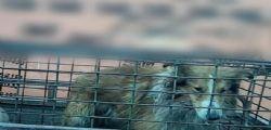 Orrore in Cina: Animalisti inglesi scoprono una fabbrica dove i cani vengono scuoiati vivi
