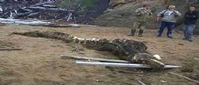 Russia : Soldati trovano una carcassa di un enorme mostro convinti si tratti di animale preistorico