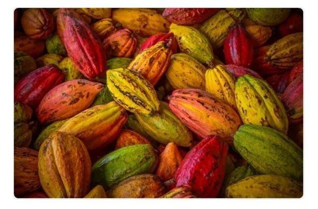 Le bevande al cacao potrebbero migliorare l