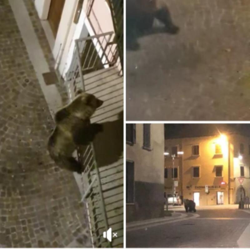 In Trentino un orso tenta di salire in un appartamento | VIDEO