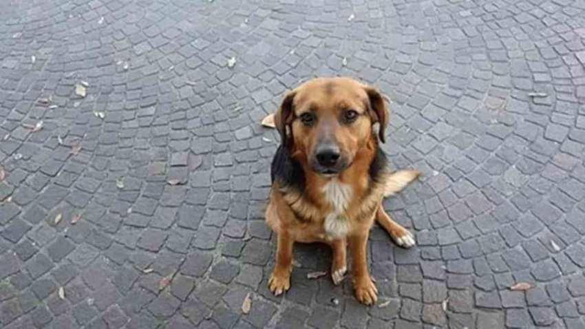Amato da tanti, scacciato da altri, ammazzato da qualcuno: addio Sindaco dei cani