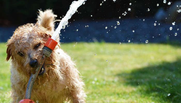 Estate e caldo : Come prenderti cura del tuo cane