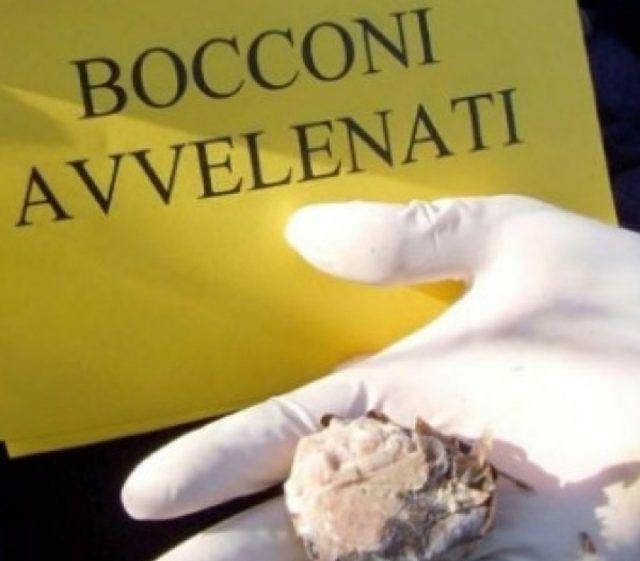Polpette col veleno per i topi! Preso il killer dei cani a Prato