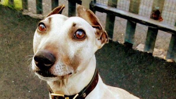Sam è il cane più solo e sfortunato del mondo! Aspetta una casa da quasi 3 anni, nessuno lo vuole
