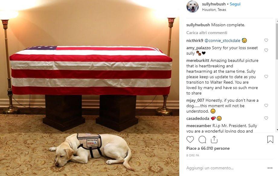 Sully, l'amico inseparabile di Bush! ll cane veglia ancora la bara