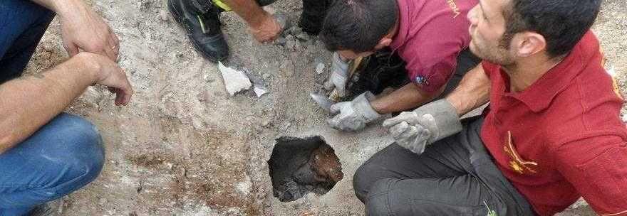 Pordenone, Fidel, il cagnolino scomparso da 5 giorni : Incastrato in un buco in strada