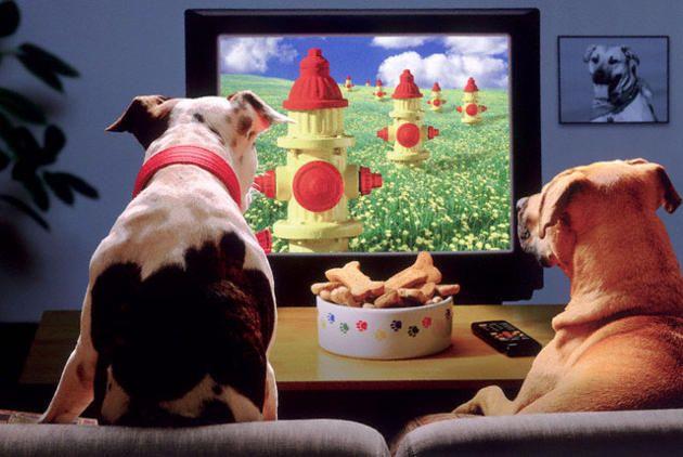 Canone Tv : quando si tratta di non pagare le tasse.