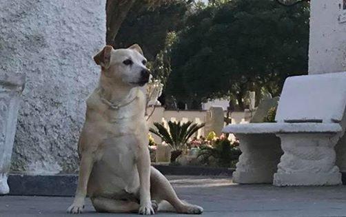 Da 10 anni veglia la tomba del suo padrone! La storia della cagnolina Nicoletta