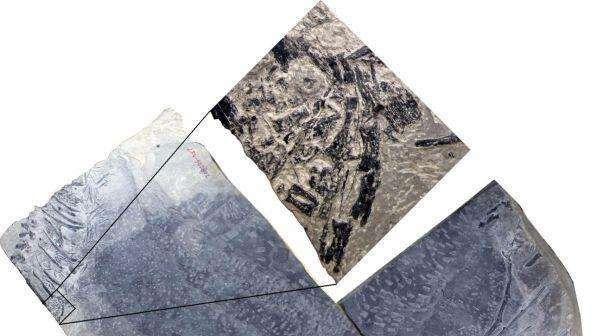 In Cina il fossile di un animale in gravidanza in epoca pre-dinosauri