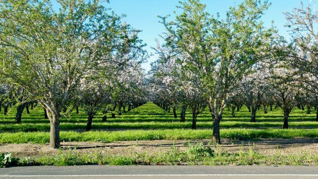 Equinozio primavera : perché il 20 marzo 2018 e non il 21?