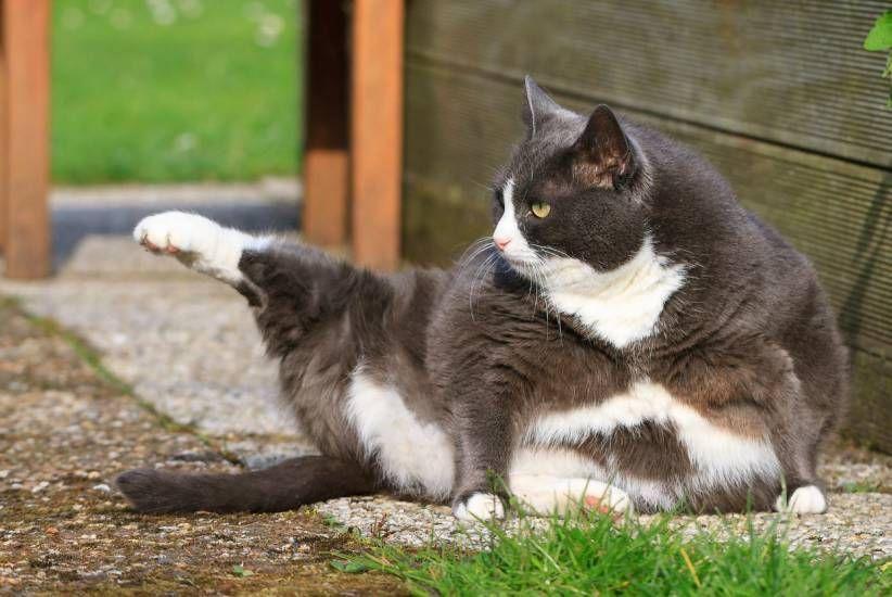 Disturbano! Mount Barker è il paese con il coprifuoco per i gatti
