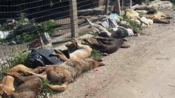 Sciacca, avvelenati 15 cani
