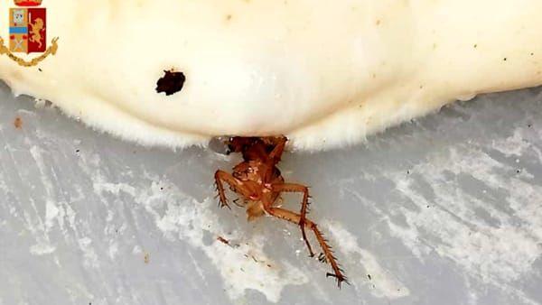 Trovano uno scarafaggo nella Pizza! Sono ovunque ... chiusa una pizzeria a Torino
