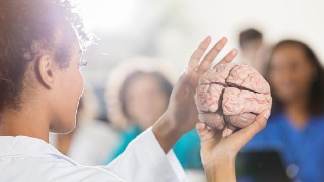 Il cervello delle donne è 3 anni più giovane di quello degli uomini